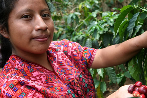 In El Salvador, NCBA CLUSA has partnered with a local NGO to teach agricultural best practices, helping coffee farmers save $3,800 on production costs for every 1.7 acres. [photo: Fairtrade America]